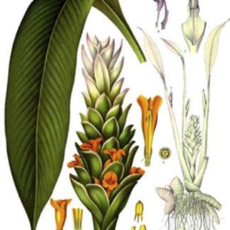 Naturales (Plantas e insectos)